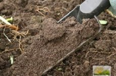 Подготовка почвы для теплицы. 3 практических совета.